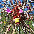 arbre aux étoiles 1 le coeur