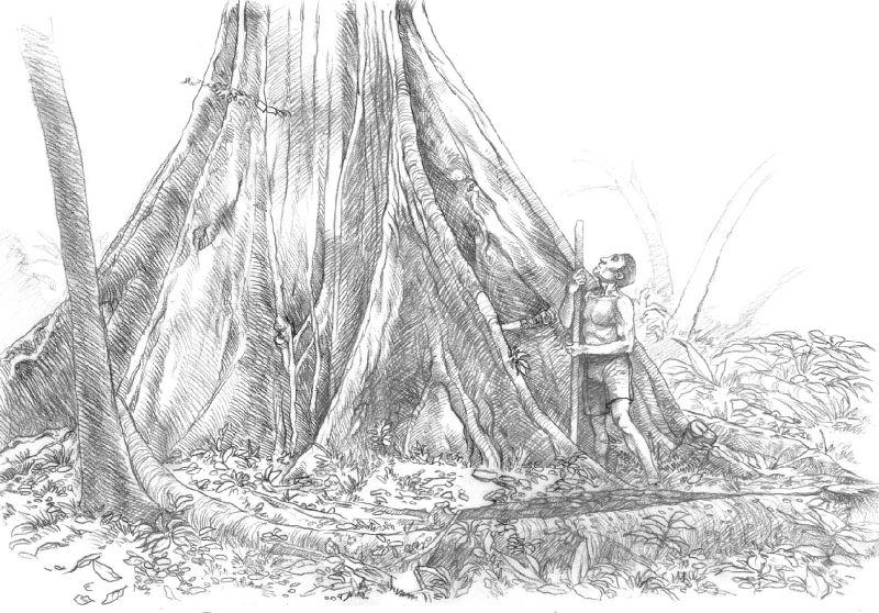sequoia debut