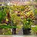 bac de plantes
