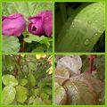 Après la pluie, le beau temps!
