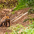 2014-05-30 LUX-0924