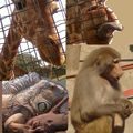 Visita al zoologico de Santiago con los jóvenes
