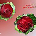 balanicole_2015_5_juin_02_rosier rouge