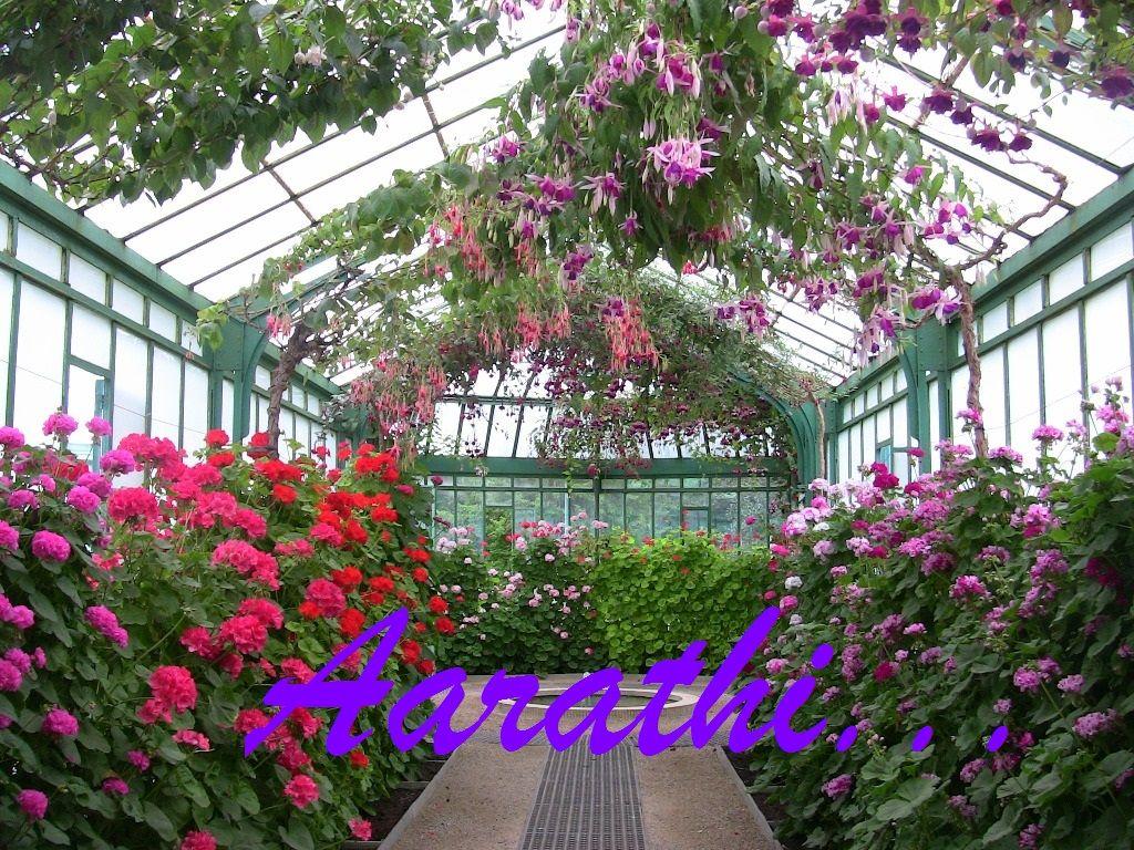 Geraniums & Fushias