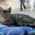 chat Makarska 2 bis