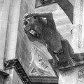 Gargouille - cathédrale saint gatien