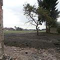 Maison Denis - 2014-06-19 - jardin r - P6196170
