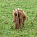 toujours une bestiole locale à poil long