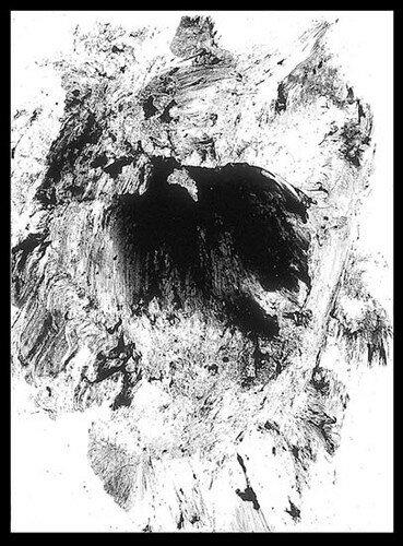 Nest-1994