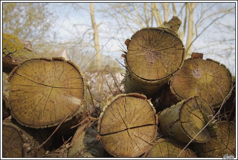 on a coupé les arbres envahissants
