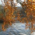 automne branches barrage