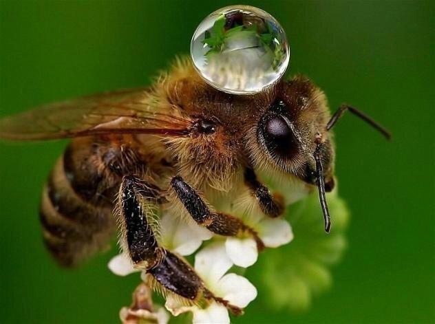 Magie Naturelle : le courage de l abeille