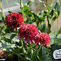 Fête automnale des plantes de Saint-Jean de <b>Beauregard</b>