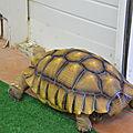Des tortues mais pas de seaturtles