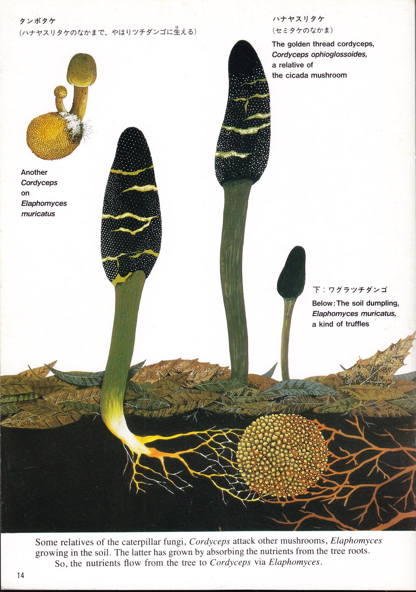 Takayama & Sagara 1985 page_14