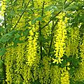 Nouvelles photos du jardin en <b>fleurs</b>