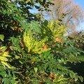 automne022