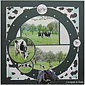 Vaches en Mayenne mai 2013 001