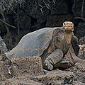 Galápagos : des scientifiques veulent « ressusciter » des <b>tortues</b> éteintes