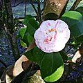 1-Fleurs de Léon 180217
