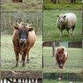 Moutons, chevaux...