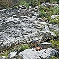 <b>Anisclo</b>, rando dans le canyon (7)