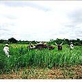 Une évaluation à mi-parcours sans complaisance du Projet National de <b>Développement</b> de l'Elevage de Centrafrique 1990