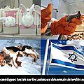 Vivisection interdite en israël !