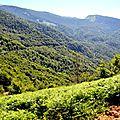 La forêt d'Issaux (vue d'ensemble)