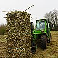 0387 - Oseraie ferme RONCKIER -27.02.2012