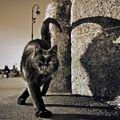 Les chats (101)
