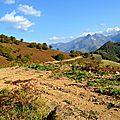 Chemins forestiers entre le col de Boesou et le Serròt de Boish.