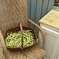 haricots demi secs - www.passionpotager.canalblog.com