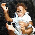 Tao Bébé singe adopté par Laurence