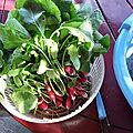 du <b>potager</b> à l'assiette et du jardin dans le vase 💐