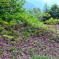 Cèpe d'été dans la fougère et les myrtilles