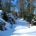 arbre_couche_neige