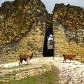 028 Lamas gardiens de l´entrée... Kuelap