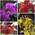 Fleurs du jardin (5)