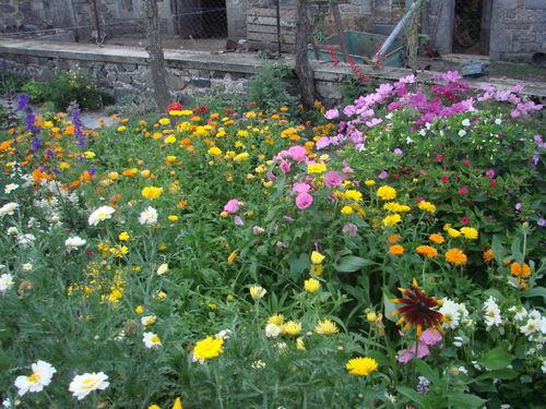 2008 09 10 Quelques fleurs de mon jardin