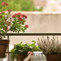 Les jardins suspendus....