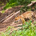 2014-05-30 LUX-1120