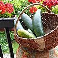 Courgettes...