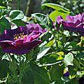 Une explosion de fleurs aux nuances violettes au cœur d'or