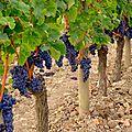 Pour les vrais amateurs de vins !