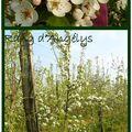 Suivi journalier de la fleur au fruit # 5 et 6