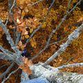 2009 10 31 Depuis le haut d'un Fayard (hêtre) vu en bas