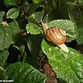 Une hélice hélas qui caracole dans mon buisson !