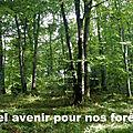 Avenir de nos Forêts