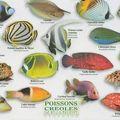 poissons_creoles